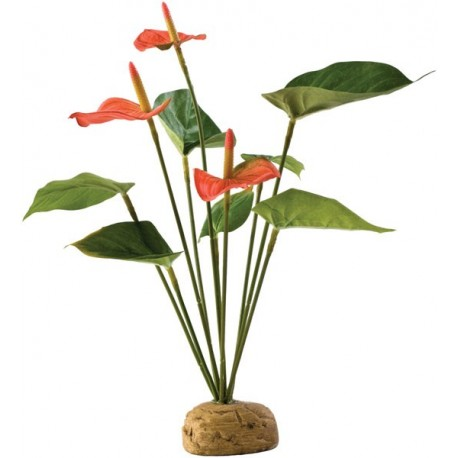 Anthurium Bush (Exo Terra)