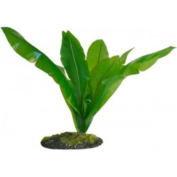 "Bird's Nest Fern - 12"" (Zoo Med)"