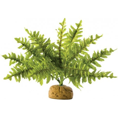 Boston Fern - SM (Exo Terra)