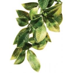 Mandarin Hanging Plant - LG (Exo Terra)