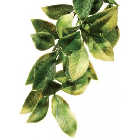 Mandarin Hanging Plant - SM (Exo Terra)