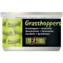 Grasshoppers - 1.2 oz Can (Exo Terra)