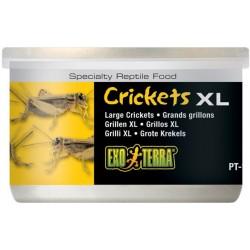 Crickets XL - 1.2 oz Can (Exo Terra)