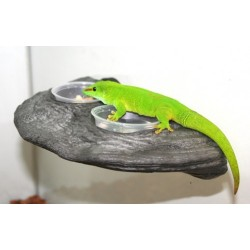 Gecko Ledge - Granite (Pet-Tech)