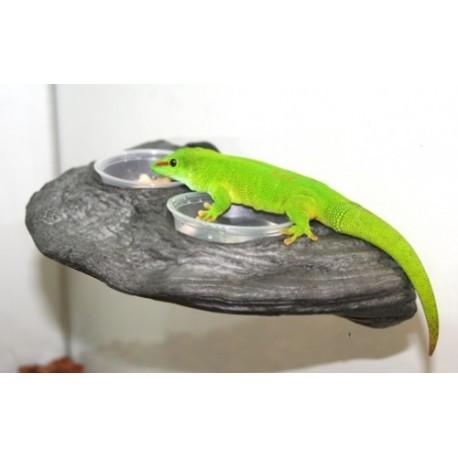 Gecko Ledge - Granite (Pet-Tech)