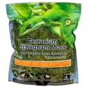 Terrarium Sphagnum Moss - 4 qt (Galapagos)