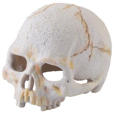 Skull - Primate - Small (Exo Terra)