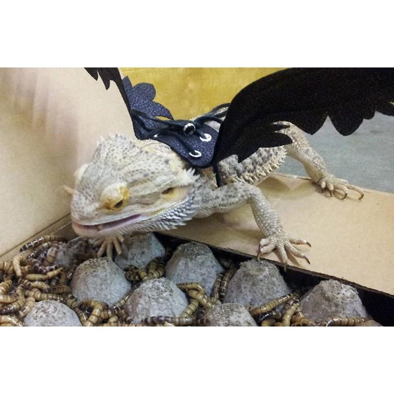 Wholesale Dragon Wings Harness