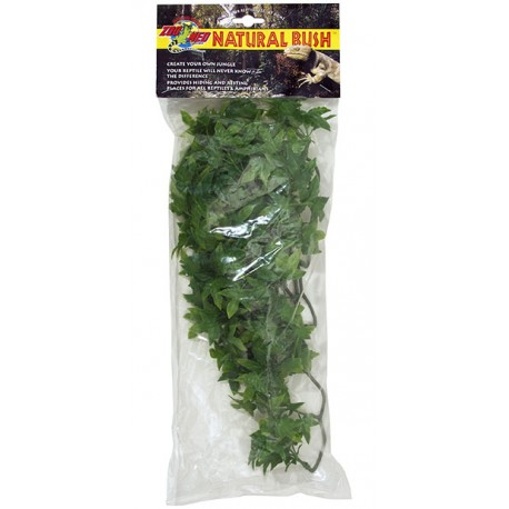 Congo Ivy - MD (Zoo Med)