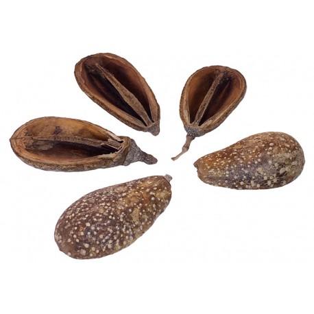 Pear Pods (RSC)