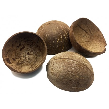 Coconut Shell Half (RSC)