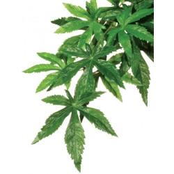 Jungle Plant - Abutilon - SM (Exo Terra)