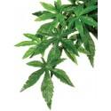 Jungle Plant - Abutilon - LG (Exo Terra)