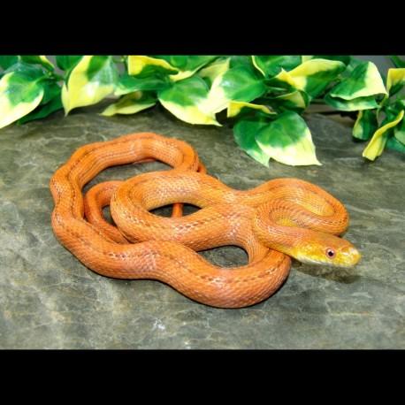 Everglades Rat Snake - ER001F