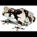 Amazon Milk Frogs