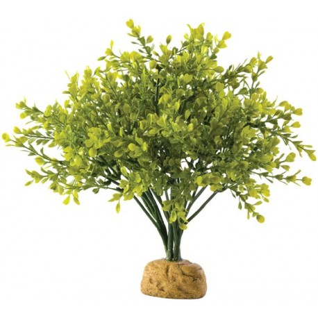 Boxwood Bush (Exo Terra)