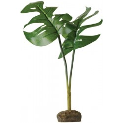 Philodendron - Tree Frog Plant (Exo Terra)