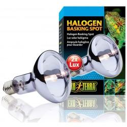 Halogen Basking Spot - 100w (Exo Terra)