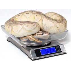 DS 6000 Digital Scale (Vivarium Electronics)