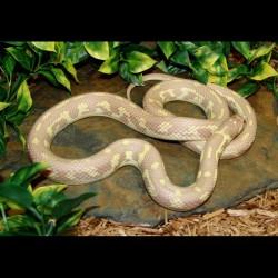 California Kingsnake - Lavender Albino Banana (2007 Female)