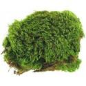 Frog Moss - 80 cu in (Zoo Med)
