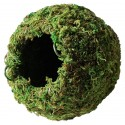 """Mossy Cave - Green - 4"""" (Galapagos)"""