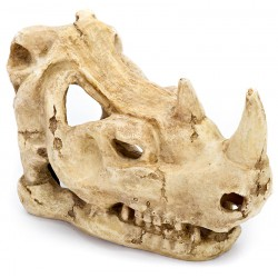 Skull - Rhino (Penn-Plax)