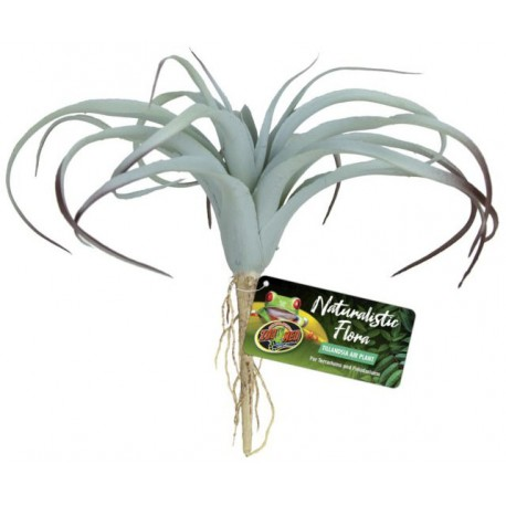 Tillandsia Air Plant (Zoo Med)