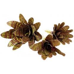 Bromeliad - Red Chestnut (Lugarti)