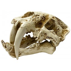 Skull - Saber-tooth (Lugarti)