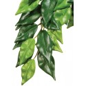 Ficus Hanging Plant - MD (Exo Terra)