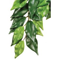 Ficus Hanging Plant - SM (Exo Terra)