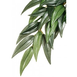 Ruscus Hanging Plant - MD (Exo Terra)