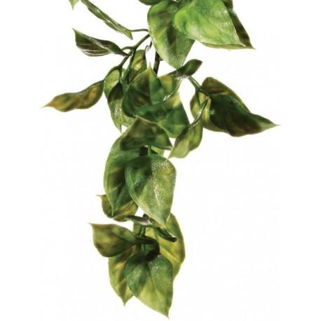 Amapallo Hanging Plant - SM (Exo Terra)