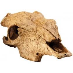 Buffalo Skull (Exo Terra)