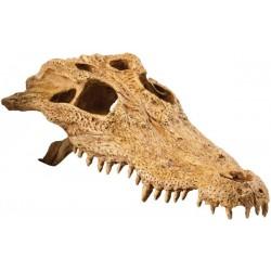 Crocodile Skull (Exo Terra)