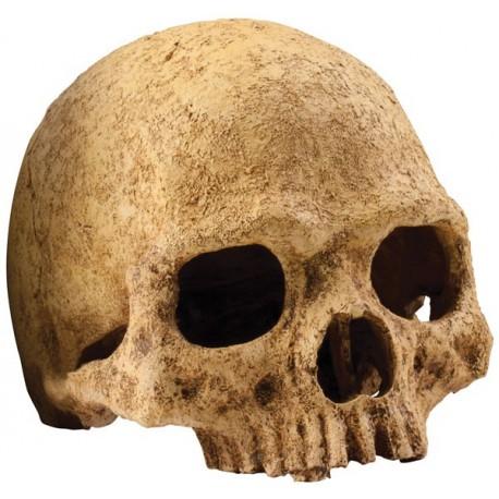 Primate Skull (Exo Terra)